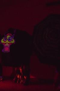 shadowmonster14